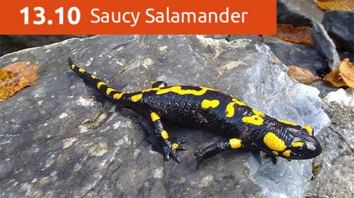 saucy-salamander